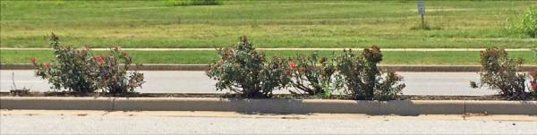 bad-pruning